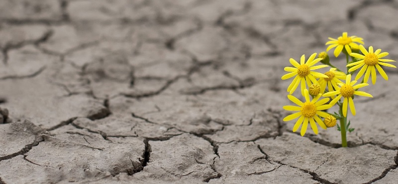 Single yellow flower growing through barren soil